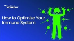 Optimize Your Immune System