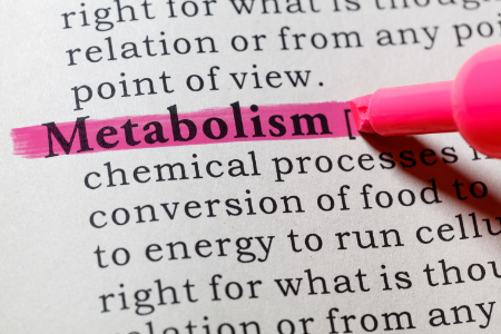 decreased Metabolism from exercising too much