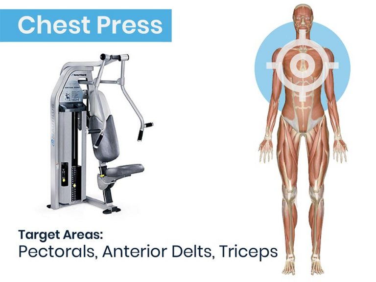 Chest Press Machine and Anatomy Graphic of muscles